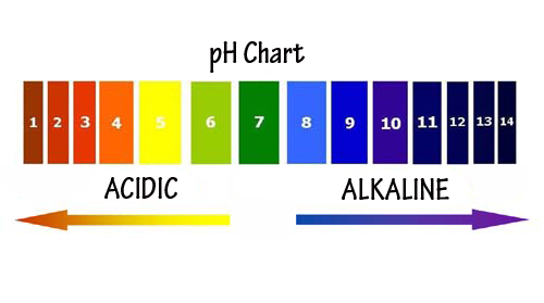 What is the Alkaline Diet? - The Green Creator