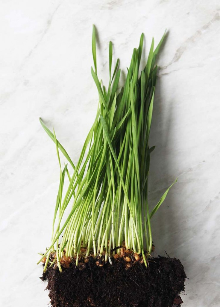 Amazoncom Living Whole Foods Artificial Wheat Grass