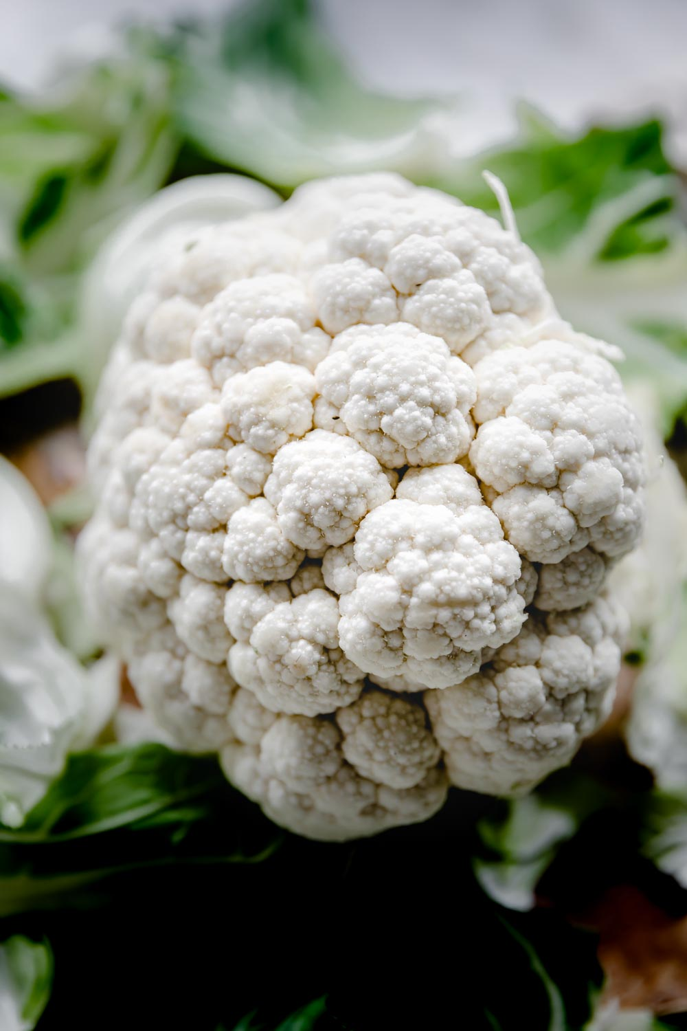 close up raw cauliflower with green leaves in the backdrop